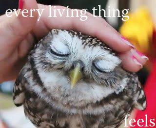 Every Living Thing Feels   San Diego with RealtorPeg