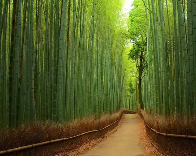 Bamboo Forest – China