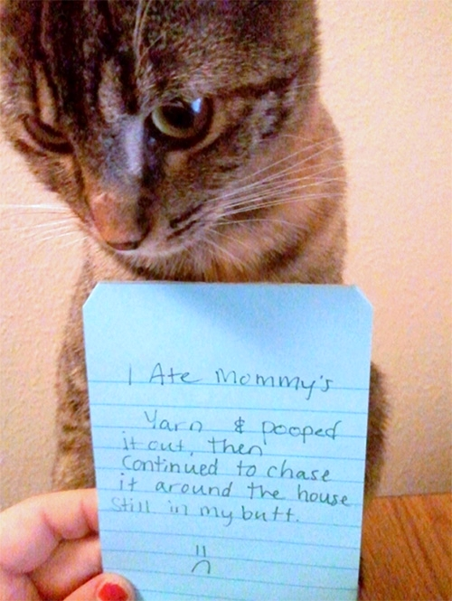 Cat - Chasing Yarn in Butt