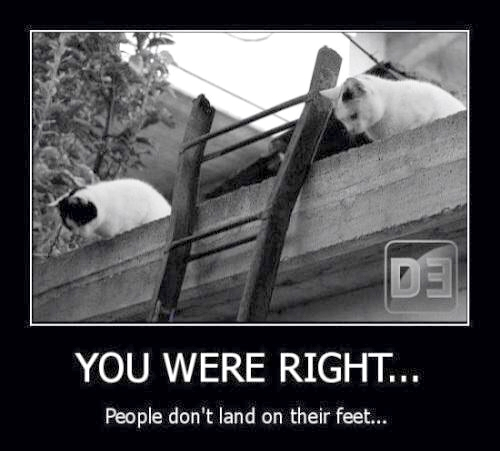 Cat - People Don't Land on Feet