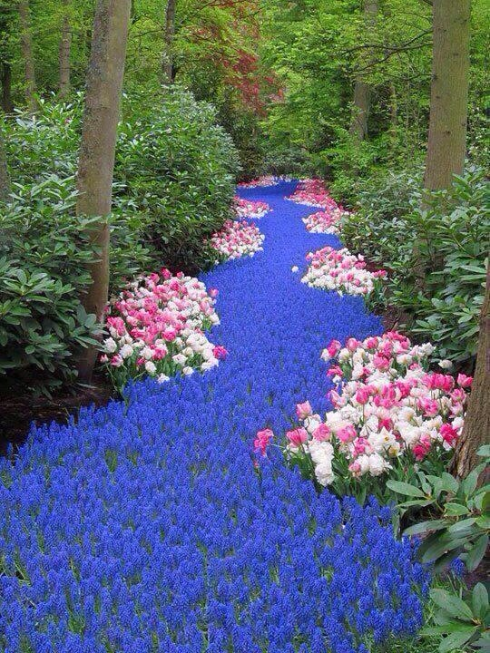 River of Flowers-Netherlands