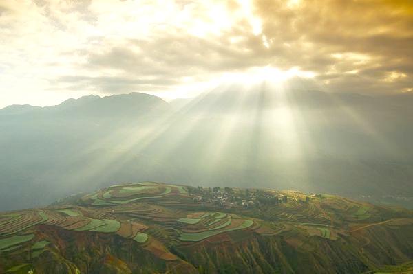 0_sunlight-rice-fields-china_74317_600x450