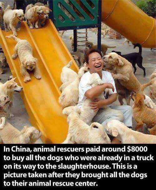 China Truckload of Dogs