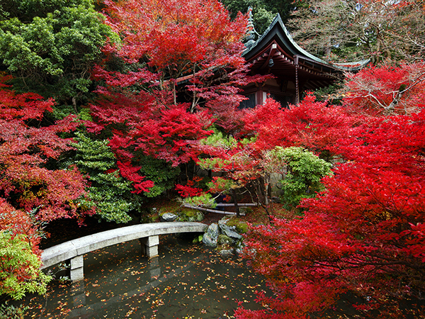 Temple garden with pond in autumn, Bishamon-do.