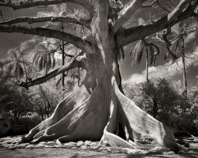 ancient-trees-beth-moon, BoredPanda