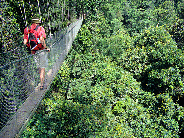 Tree top walkway in Kakum national park, near cape coast west ghana. Image shot 2000. Exact date unknown.