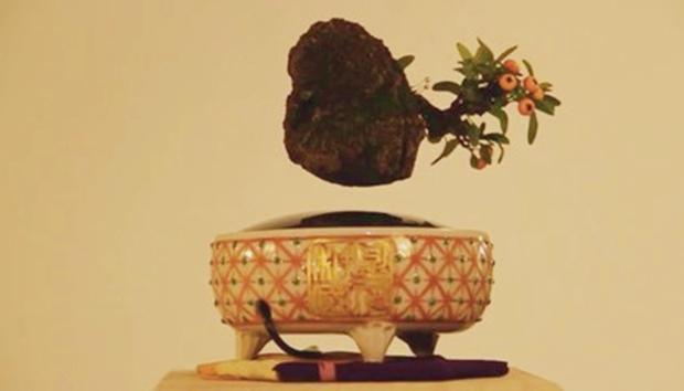 Levitating Bonsai, Smithsonian