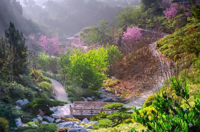 Balboa Park, Japanese Garden, ATS Tran, FB