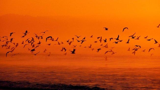 Migrating Birds, Smithsonian