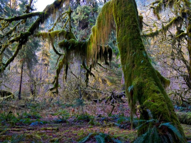 Quietest Place2, Hoh Rainforest, Olympic Natl Park, Smithsonian