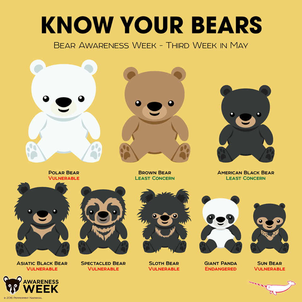 Bear Species Chart 2033 | VIZUALIZE Bear Species Chart